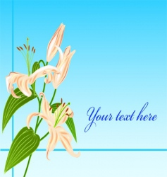 Lily flower greatings card vector
