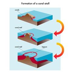 Coral atoll vector