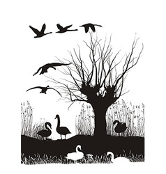 Swans on the shore vector