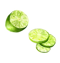 Half of lime vector