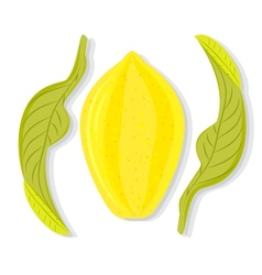 Whole lemon with leaves vector