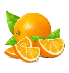 Fresh ripe oranges vector