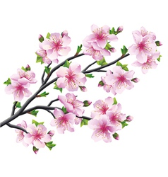 Japanese tree sakura cherry blossom vector