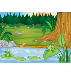 Frogs in nature vector