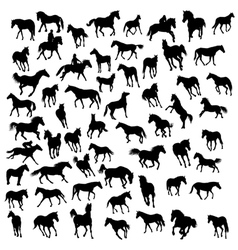 Big collection of different horses silhouettes vector