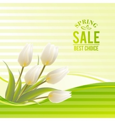 White tulip spring flowers bouquet for sale vector