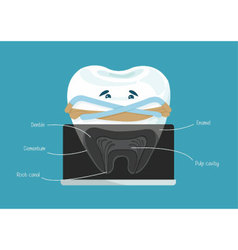 Root canal dental vector