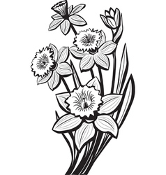 Sketch of narcissus flowers vector