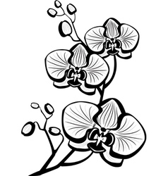 Sketch of orchid flowers vector