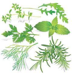 Collection of fresh herbs vector
