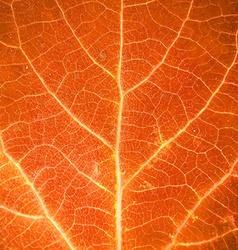 Orange leaf texture vector