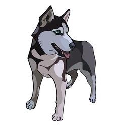 Husky dog painted vector