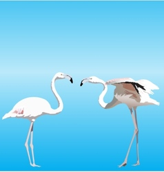 With two flamingo vector