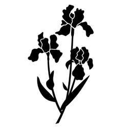 Black silhouettes of iris vector