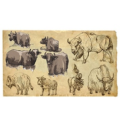 Animals theme bovidae cows bisons yak buffalo pac vector