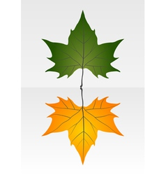 Green and dry leaf vector