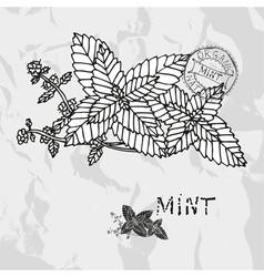 Hand drawn mint plant vector