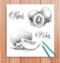 Realistic sketch of fruits kiwi and melon vector