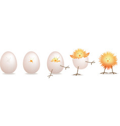 Hatching chick vector