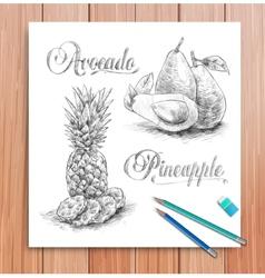 Realistic sketch of fruits avocado and vector