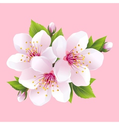 Branch of pink blossoming sakura japanese cherry vector