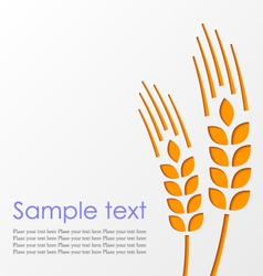 Wheat background eps10 vector