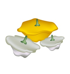 Pile of pattypan squash on white background vector