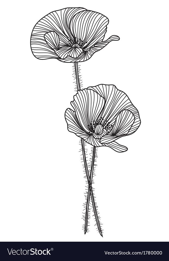 Decorative poppies vector | Price: 1 Credit (USD $1)