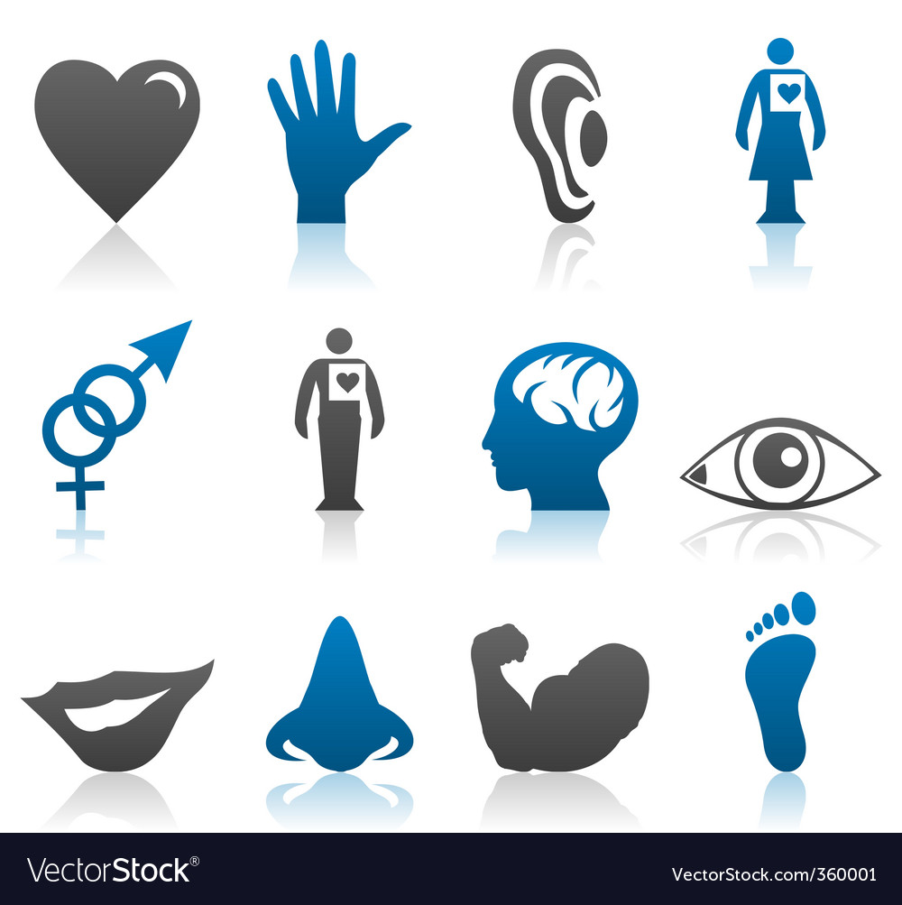 Physiology icons vector | Price: 1 Credit (USD $1)