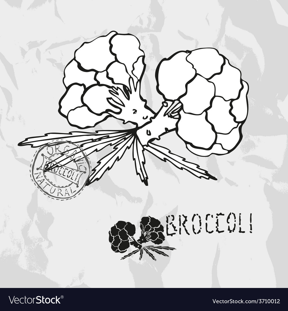 Hand drawn broccoli vector | Price: 1 Credit (USD $1)
