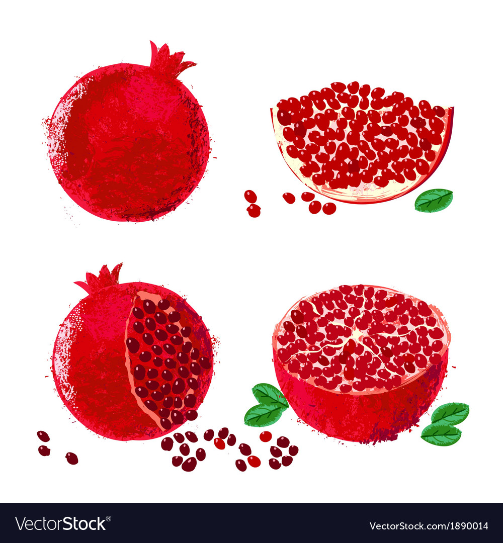 Pomegranate fruits vector | Price: 1 Credit (USD $1)