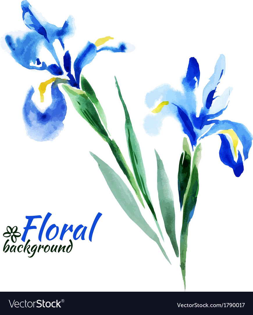 Beautiful watercolor paint blue irises vector | Price: 1 Credit (USD $1)