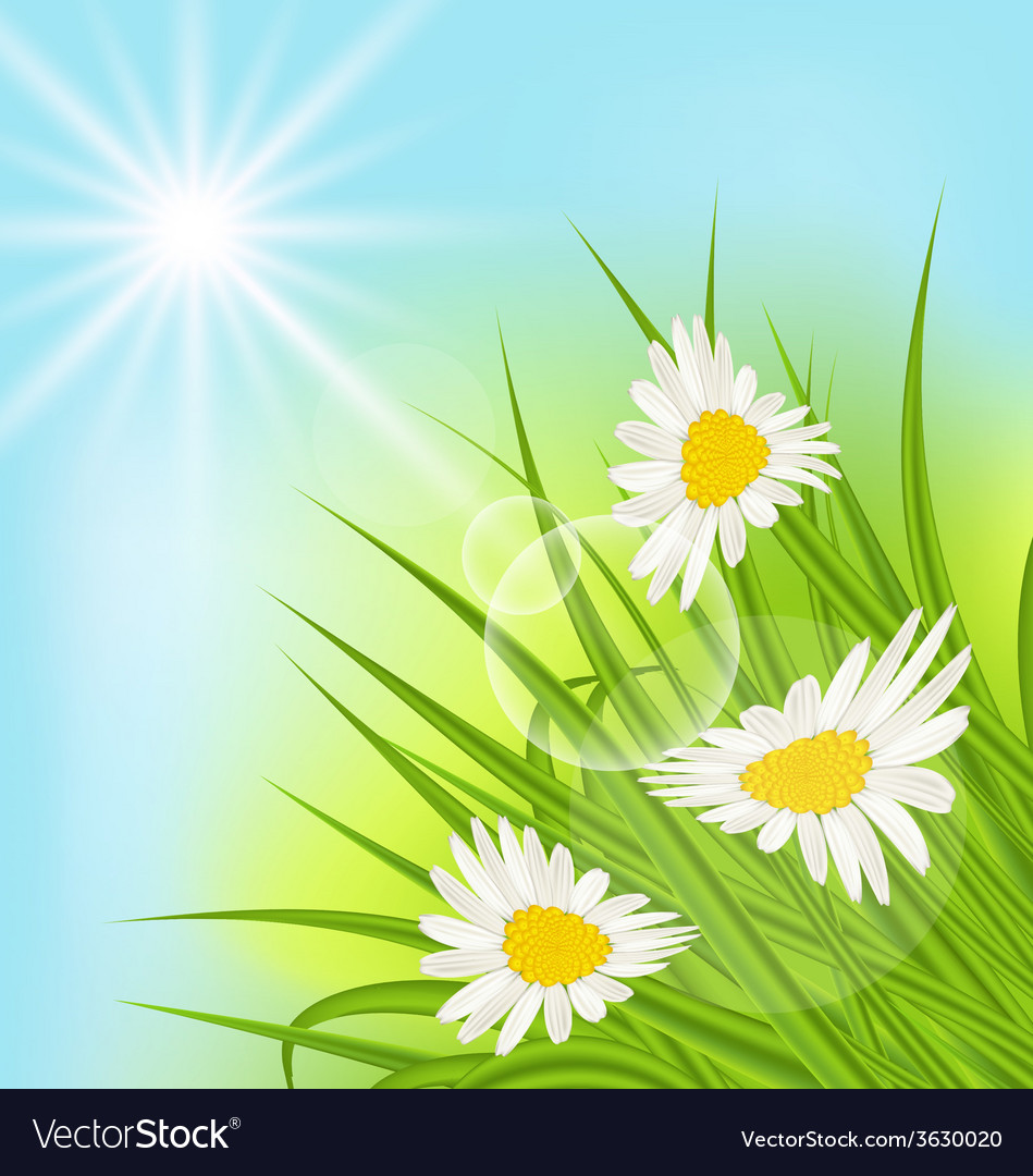 Summer nature background with daisy grass blue sky vector | Price: 1 Credit (USD $1)
