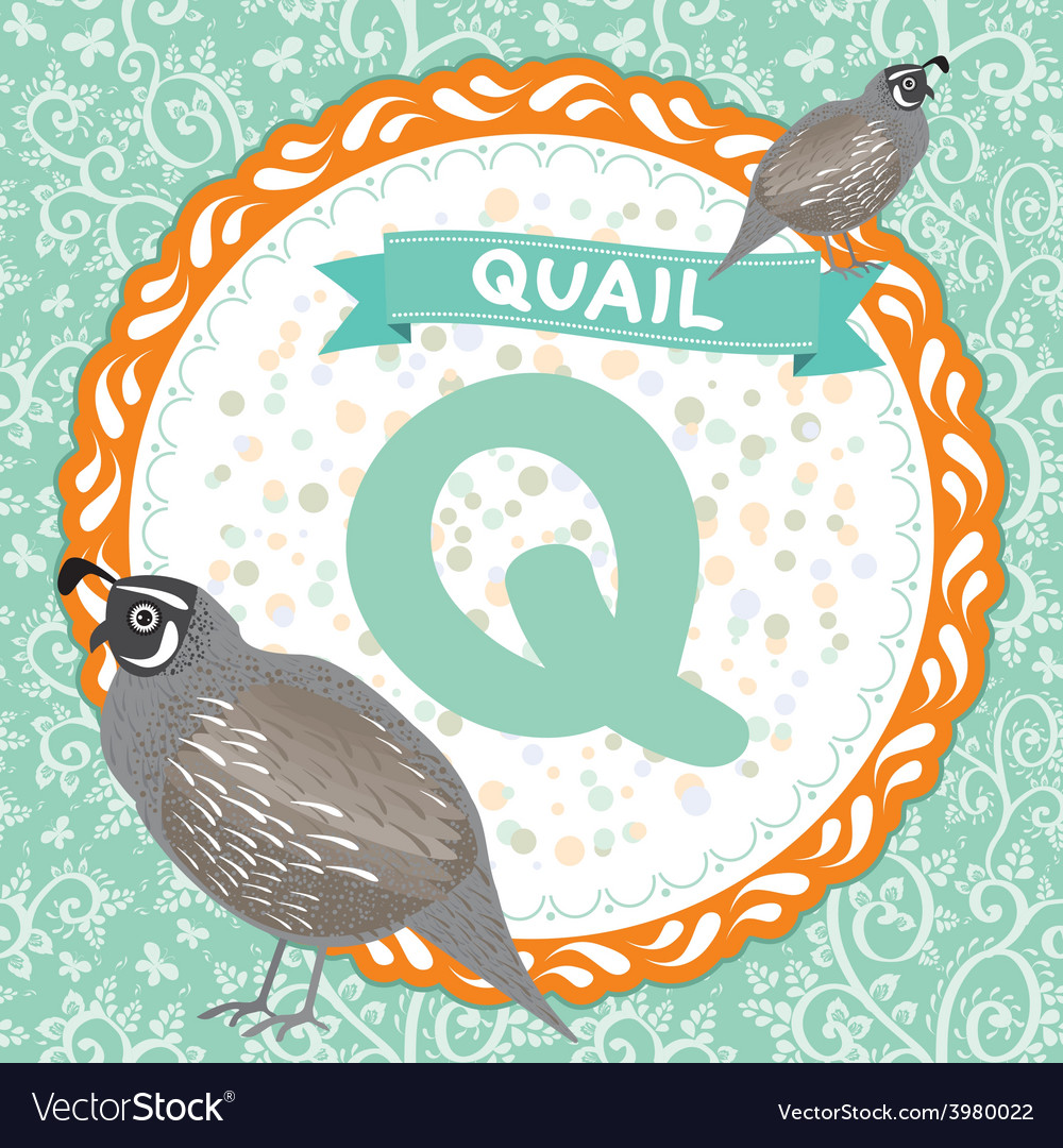 Abc animals q is quail childrens english alphabet vector | Price: 1 Credit (USD $1)