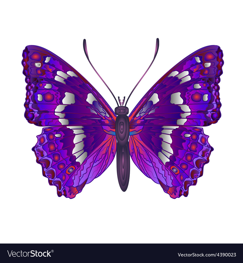 Butterfly apatura iris forest butterfly vector | Price: 1 Credit (USD $1)