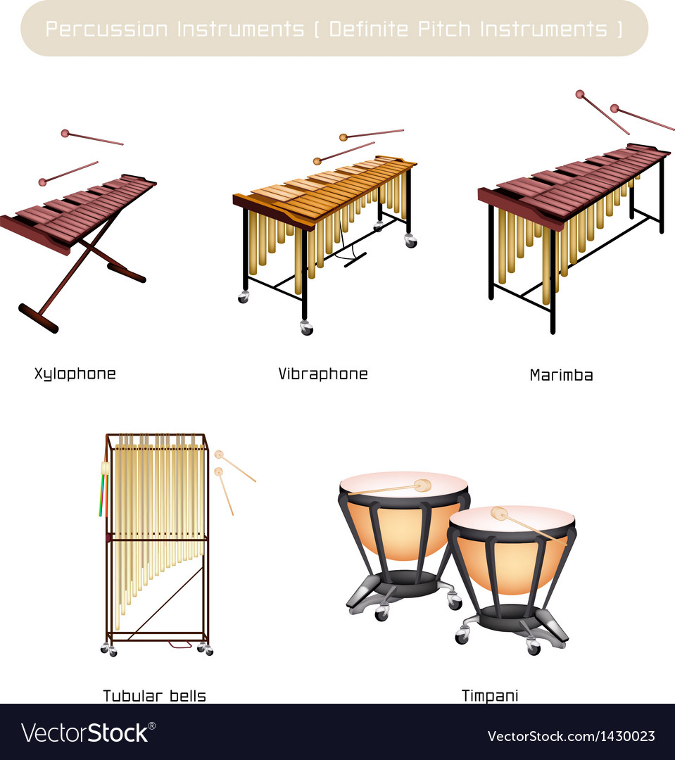 Set of musical percussion instruments vector | Price: 1 Credit (USD $1)