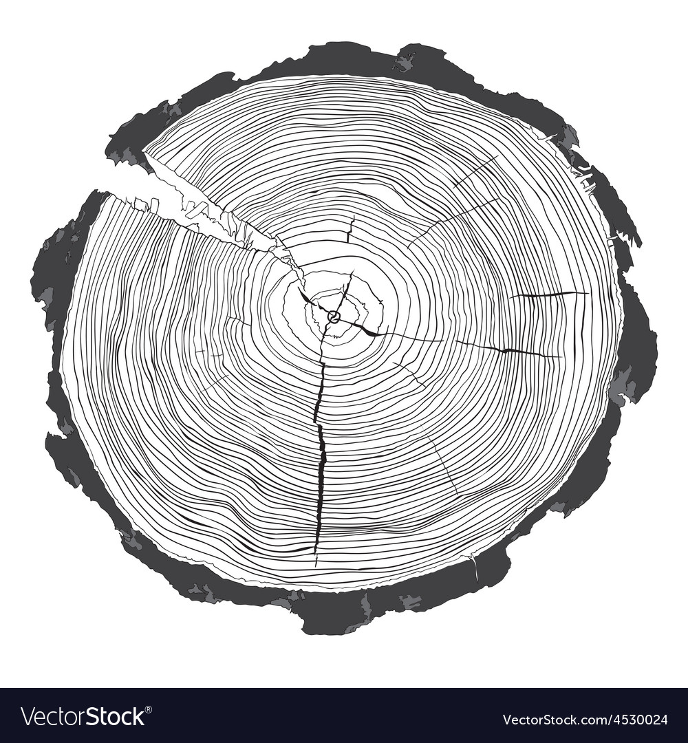 Annual tree growth rings with grayscale drawing of vector | Price: 1 Credit (USD $1)