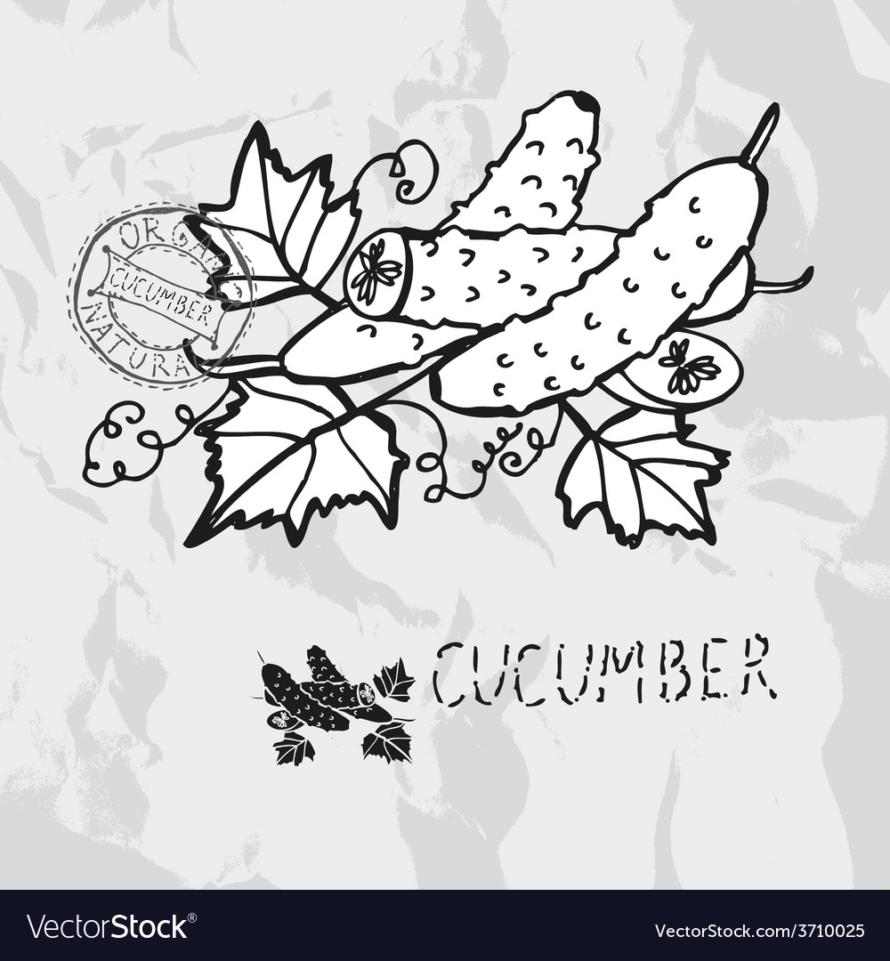Hand drawn whole and sliced cucumbers vector | Price: 1 Credit (USD $1)
