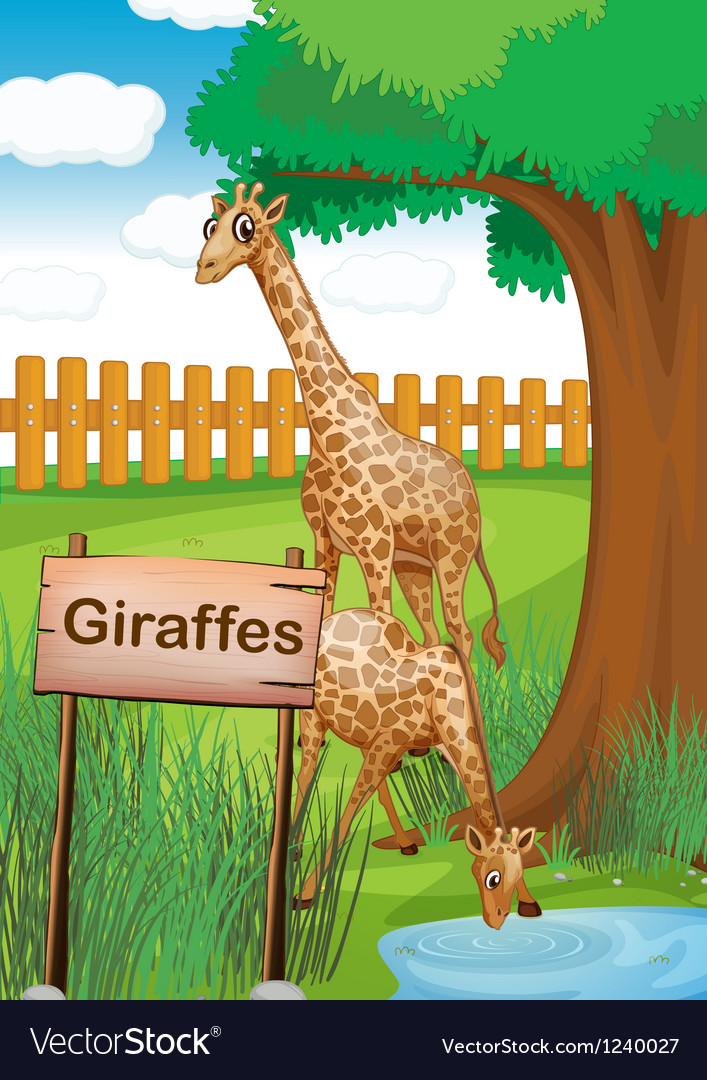 Giraffes inside the wooden fence vector | Price: 1 Credit (USD $1)