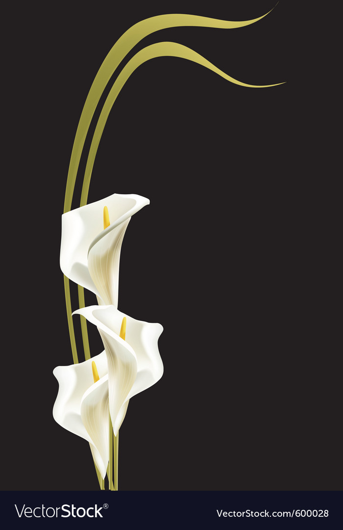 White lilies vector | Price: 1 Credit (USD $1)