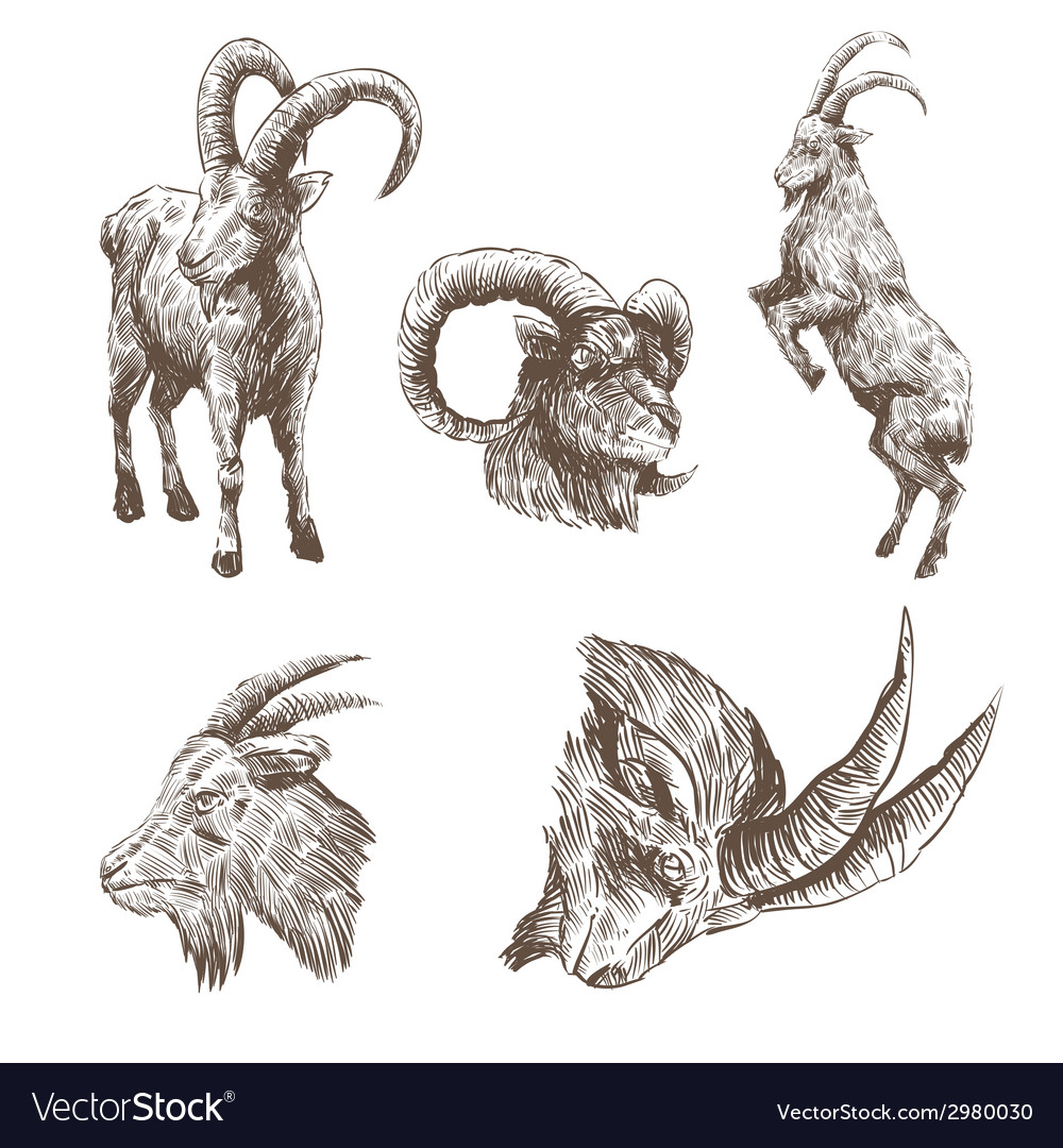 Goat drawing isolated vector | Price: 1 Credit (USD $1)