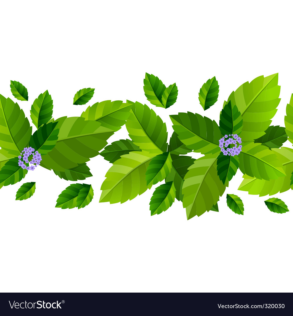 Mint leaves background vector | Price: 1 Credit (USD $1)