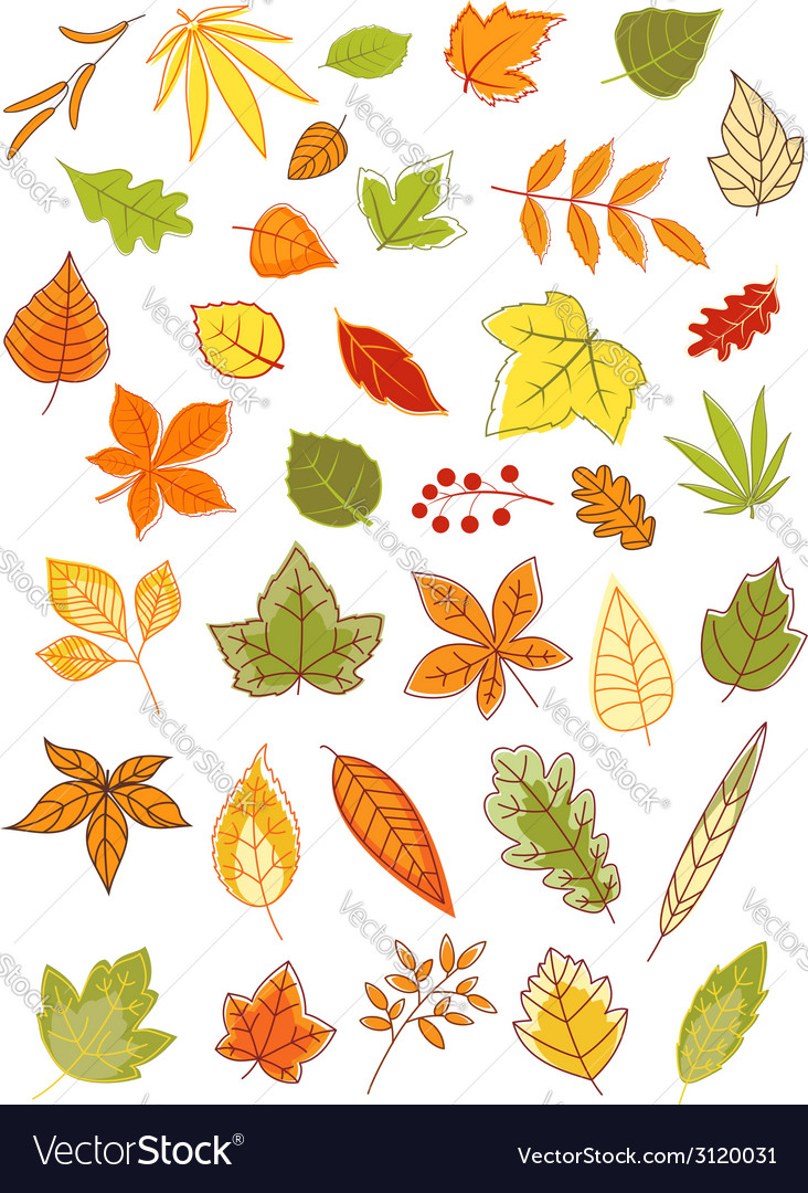 Colorful autumn leaves set vector | Price: 1 Credit (USD $1)