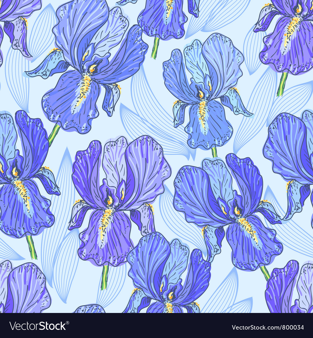 Purple iris vector | Price: 1 Credit (USD $1)
