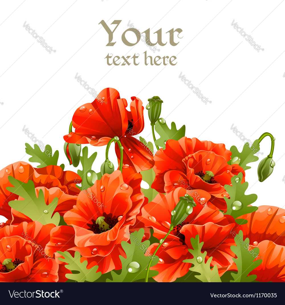 Beautiful banner with red poppies for your message vector | Price: 1 Credit (USD $1)