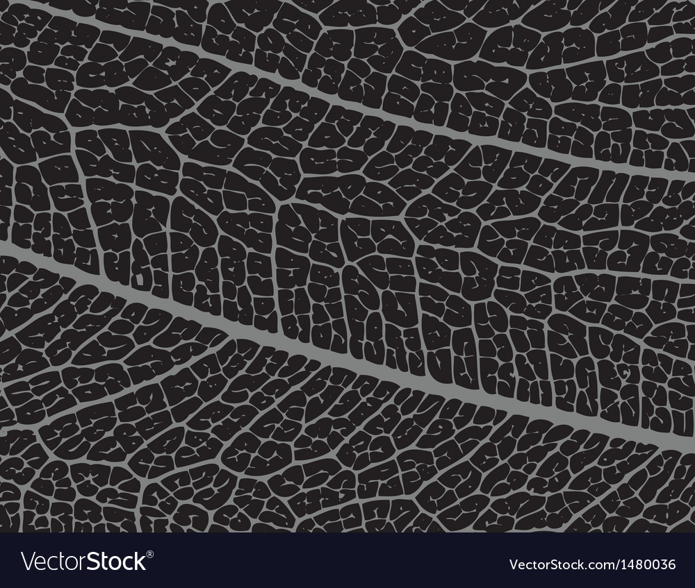 Leaf structure vector | Price: 1 Credit (USD $1)