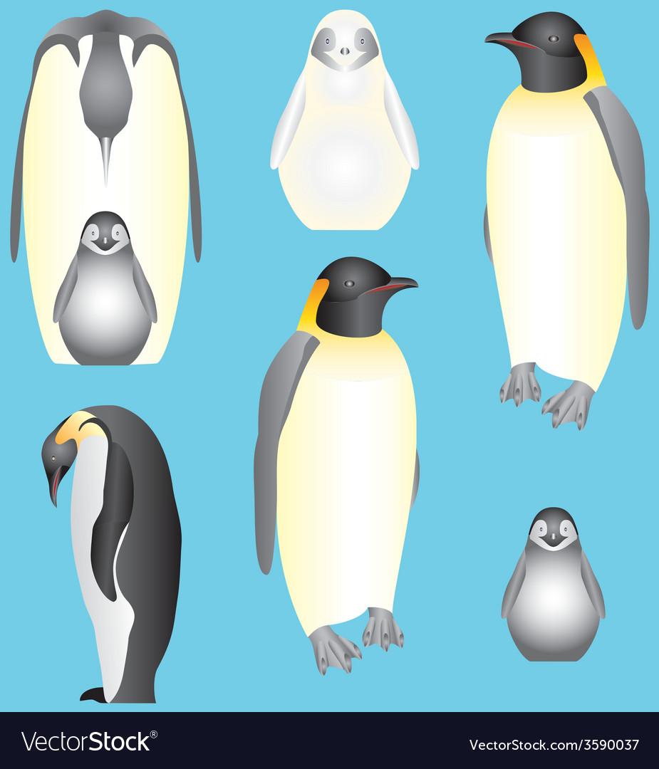 Emperor penguins vector   Price: 1 Credit (USD $1)