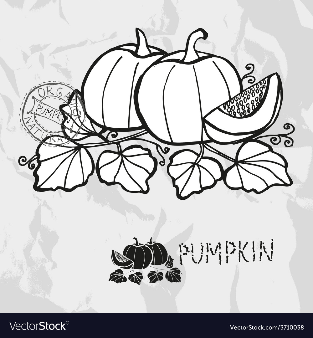 Hand drawn whole and sliced pumpkins vector | Price: 1 Credit (USD $1)