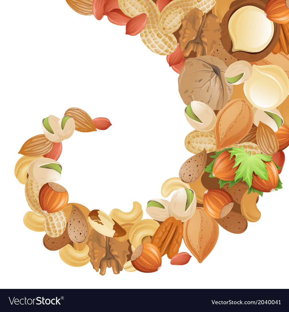 Nuts vector   Price: 1 Credit (USD $1)