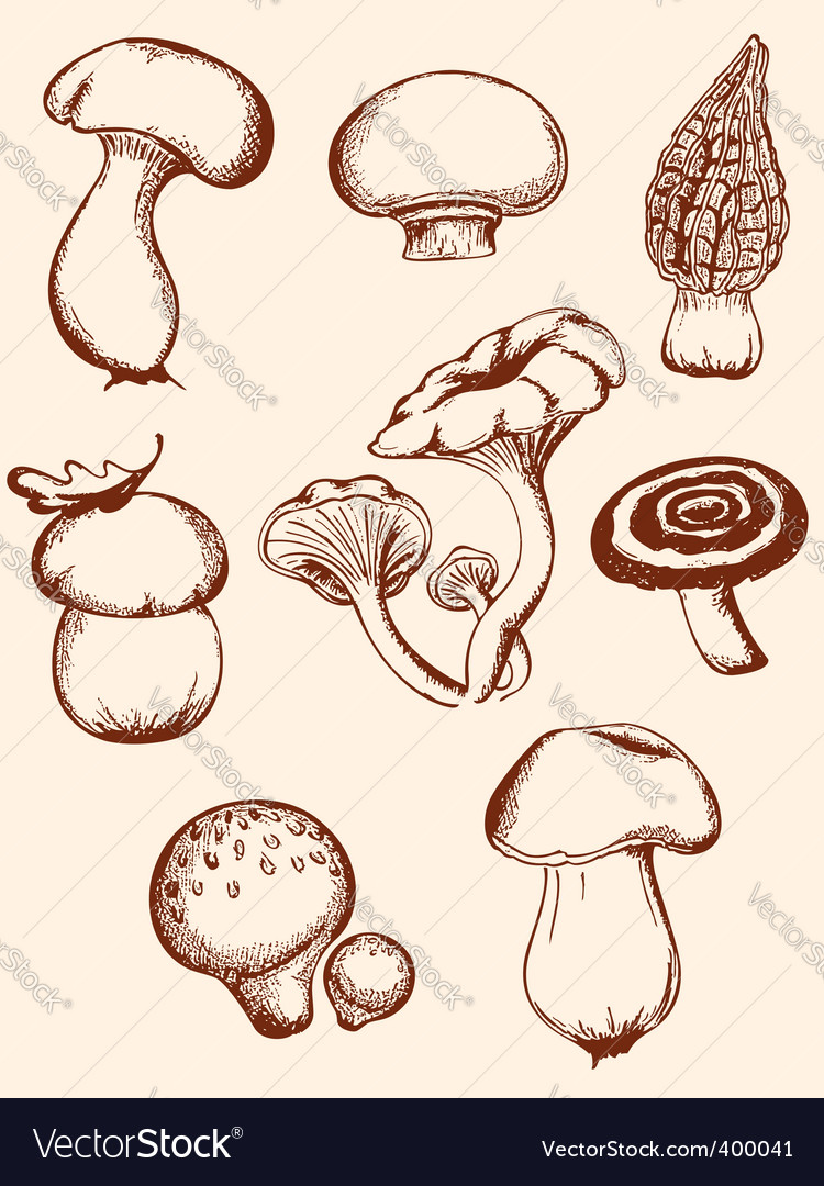 Set of vintage forest mushrooms vector | Price: 1 Credit (USD $1)
